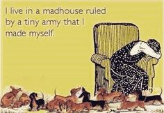 """I live in a madhouse ruled by a tiny army that I made myself."""