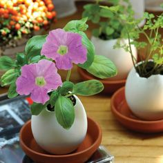 Plant the Seed: A Potless Approach to Spring Gardening