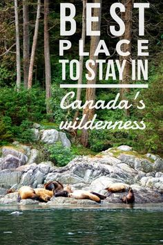 With so many beautiful places in Canada how do you choose a summer getaway? Learn more about this astounding wilderness resort on Canada's west coast. With no crowds at this Canada getaway your vacation in Canada with be peaceful and serene. #Canada #canadatravel #travel #wilderness
