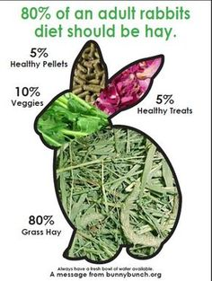 trendy pet bunny care tips house rabbit Meat Rabbits, Raising Rabbits, Bunny Rabbits, Food For Rabbits, Caring For Rabbits, Veggies For Rabbits, What Can Rabbits Eat, Show Rabbits, Rabbit Diet