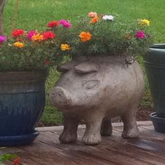 Floral pig from Fayetteville AR