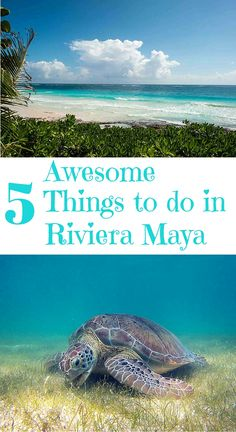 """Itching to swim with turtles? Want to swim in a """"cenote""""? Love to see a magical Cirque du Soleil show? Check out these 5 awesome things to do in Riviera Maya, Mexico (when you can tear yourself away from your luxury all-inclusive resort, of course)."""