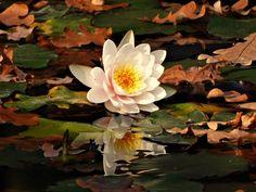 Autumn reflection - Pixdaus