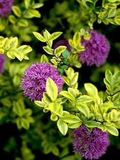 Employ Variegated Foliage
