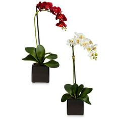 Nearly Natural Red Phalaenopsis Orchid Silk Arrangement With Black... ($62) ❤ liked on Polyvore featuring home, home decor, floral decor, red, orchid flower arrangement, black fake flowers, fake flower bouquets, silk flower bouquets and red silk flowers