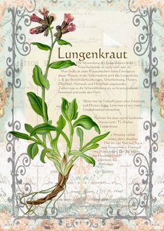 Pictures from the book Old Medicinal Herbs Drawings Healing Herbs, Medicinal Herbs, Container Flowers, Container Plants, Gemüseanbau In Kübeln, Design Jardin, Fall Planters, Container Gardening Vegetables, Fall Flowers