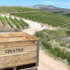 Creation wines is all about breathtaking views, and wines amazingly paired with delicious food Pinot Noir, Fine Wine, Heaven On Earth, Delicious Food, Wines, Red Wine, To Go, Explore, Outdoor Decor