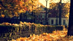 Autumn Afternoon In my city Groningen....