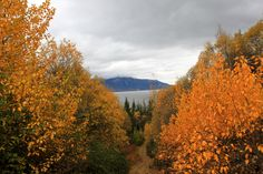 Alaska in the fall... The place where  My dream home would be