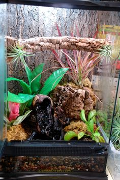 Nice vivarium!  For White's tree frogs have shallower water with large stones that can't be ingested instead of the small pebbles