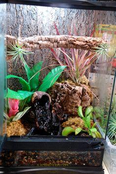 Nice vivarium For Whites tree frogs have shallower water 1 scaled Tree Frog Terrarium, Gecko Terrarium, Reptile Terrarium, Terrarium Ideas, Paludarium, Vivarium, American Green Tree Frog, Dumpy Tree Frog, Frog Habitat