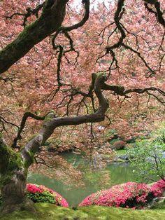 Japanese maples and azaleas in the Japanese Garden in Portland. Photo by Taryn Koerker