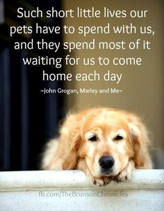 Such short little lives our pets have to spend with us, and they spend most of it waiting for us to come home each day. ~ John Grogan, Marley and Me