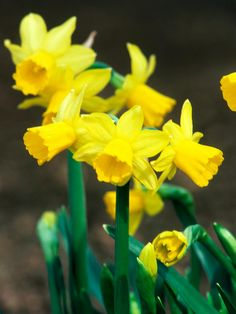 As long as your soil isn't frozen, you still have time to plant these gorgeous spring bloomers. Imagine how your yard will look in spring, and bury a few of these bulbs now.