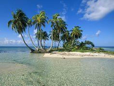 Rüya Tabirleri | Rüyada Palmiye Ağacı Görmek