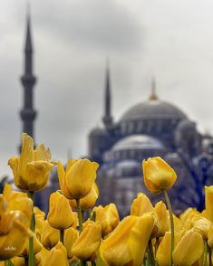 Istanbul by osmantpcu. Beautiful Places In The World, Beautiful Places To Visit, Amazing Places, Turkey Pics, Istanbul Travel, Istanbul City, Beautiful Mosques, Islamic Wallpaper, Turkey Travel
