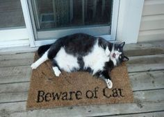The sign says it all. | #HuffingtonPost.com | #cats #humor