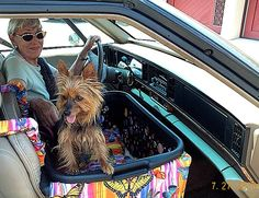 Zoe dog car seats for small dogs 25 pounds and under. Need one for your dog. Search Ebay for Zoe dog car seat.
