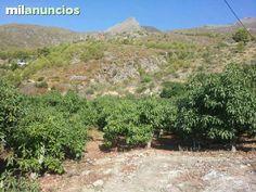MIL ANUNCIOS.COM - Rio de la miel. Compra-venta de parcelas rio de la miel en Málaga sin intermediarios. Parcelas baratas rio de la miel en Málaga.