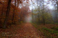 morning fog  by Lukaspetz
