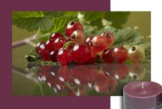 Currant Casanova - An infatuating liaison of tart red currants, luscious cranberries and sensuous ripened figs is caressed with a whisper of citrus. It's impossible to resist Casanova's juicy charms.  Available forms: Votive Candles, Large Tealight Candles, Scented Candle, Fragrance Oil, Lip Gloss. #PartyLite