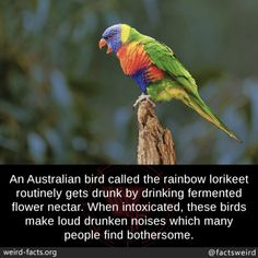 Scary Facts, Wtf Fun Facts, Strange Facts, Beautiful Birds, Animals Beautiful, Australian Parrots, Medical Mnemonics, Bird Calls, Facts You Didnt Know