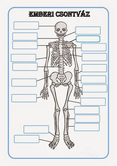 A useful set of worksheets for your children to label the human skeleton. Human Skeleton Labeled, Skeleton Model, Cc Cycle 3, Human Body Unit, Memorial Tattoos, School Daze, Nature Study, Music Classroom, Human Anatomy