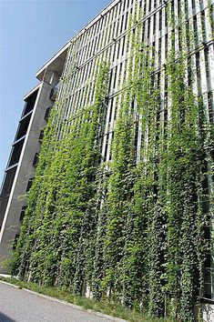 Green wall with timber behind - could be horizontal.