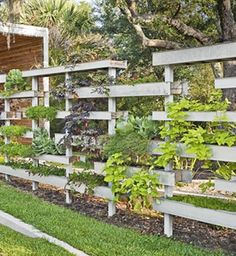 LIVING PRIVACY - Half fence, half garden, this leafy privacy screen is a cornucopia of smaller plants grown in a series of planter boxes made from water-resistant cypress. You won't want to seal the boxes — let them drain — and use shallow-rooted plants, such as creeping Jenny, sweet alyssum, and herbs.