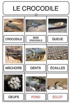 Lexique - thème savane Crocodiles, Continents, Reptiles, Projects, Animals, Cycle 2, Delaware, School, Montessori