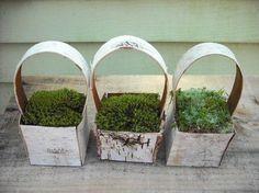 Birch Bark & Moss Mini Baskets