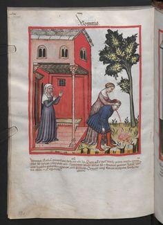 Folio 99v (page 202). Tacuinum sanitatis, Codex Vindobonensis, series nova 2644. North Italy, probably Verona, 1380-1399.