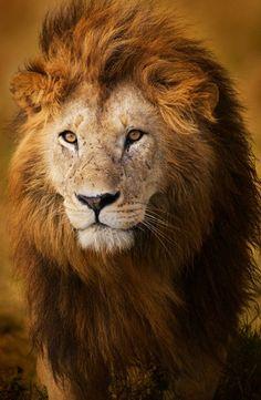 dia del leon