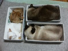 a pinner said...My 4 have never shared a box but they do each have their own box. Forget the nice plush cat bed I bought..