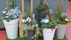 Idées pour vos jardinières ! - 302