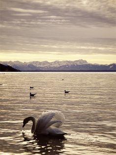 Starnberger See in Bayern, Weihnachten 2011, von faltmanufaktur