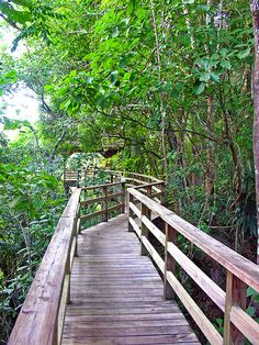 canopy tree walk, DuPlooy's Jungle Lodge, Belize