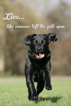 My wish for you in 2013: Live like someone left the gate open!