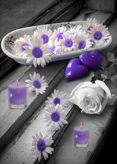 splash of color Purple Love, All Things Purple, Shades Of Purple, Purple Flowers, Deep Purple, Color Splash, Color Pop, Heart Wallpaper, Purple Reign
