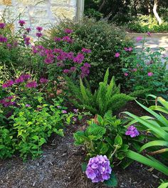 Color is the most conspicuous element in the landscape. It's what others notice when they visit and it's how we plan on our forays to local nurseries.