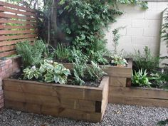 Retaining the soil around the base of the existing large tree behind the second pergola are raised beds created from new railway sleepers.