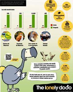 Animales como el cernícalo de las islas Mauricio o la paloma rosada, hacen parte de las especies que esta campaña liderada en internet por un simpático dodo.
