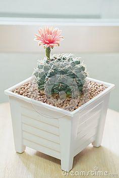 Cacti, Terrarium, Decorative Boxes, Beautiful, Home Decor, Cactus, Cactus Plants, Terrariums, Decoration Home