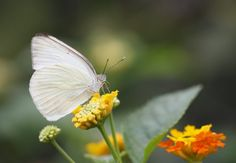 Light Colored Insects Surviving Warming Conditions in Europe - SCIENCE WORLD REPORT #LightColoredInsects, #Nature