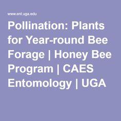 Pollination: Plants for Year-round Bee Forage | Honey Bee Program | CAES Entomology | UGA