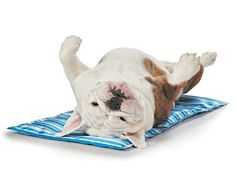 13 Easy Ways to Keep Your Dog Cool This Summer - this cooling pet bed helps your dog stay cool and prevents heatstroke and overheating