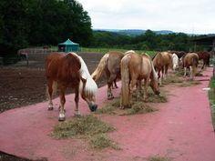 Yksilöiden riittävät välimatkat tai väliseinät ja syöntiajan pidentäminen vähentävät hevosten välisiä aggressioita ruokinta-aikoina.