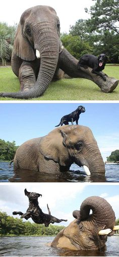Adorable unexpected animal friendship.