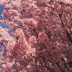Happy Spring Happy Easter! #springtime #happyeaster