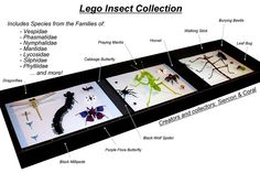 Lego Insect Collection by Siercon and Coral, via Flickr